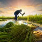 کود کشاورزی